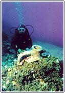 Photo of Bodrum – Büyük ve Küçük Resif