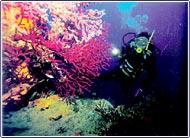 Photo of Ayvalık – Cunda Adası