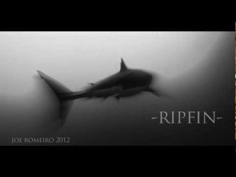 Photo of Cal Ripfin – Büyük Beyaz Köpek Balığı