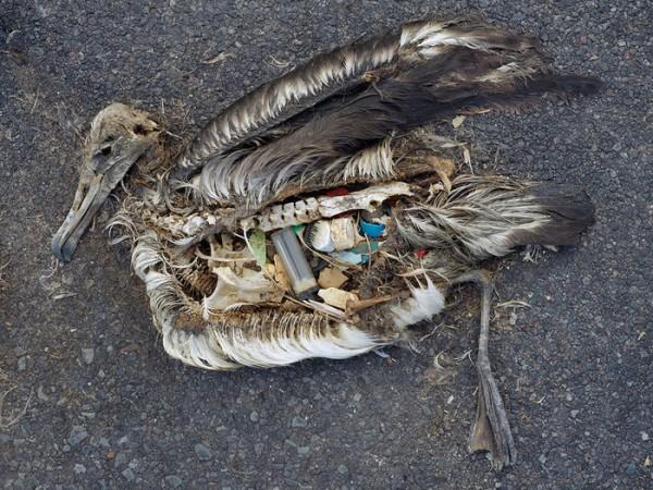 Photo of Pasifik Okyanusunun Ortasında İnsansız Bir Adada İnsani Atıkların Etkisi