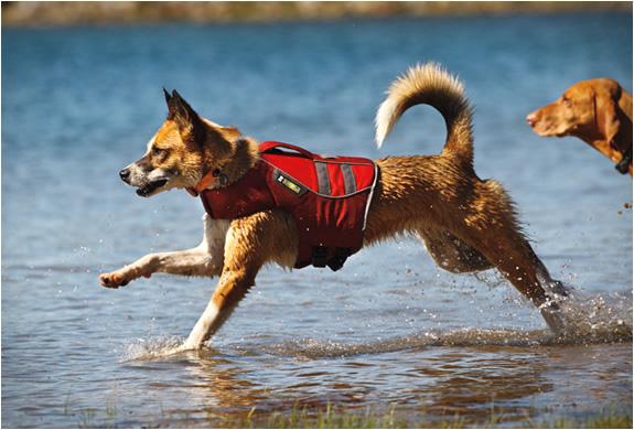 Photo of Evcil Dostlarınızın Denizde Güvenliği İçin Ruffwear