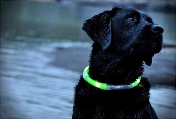 Photo of Glowdoggie