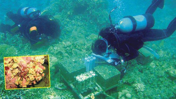 Photo of Çanakkale mercanına BM'den koruma
