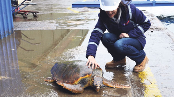 Photo of Marmara'da Yine Caretta Caretta