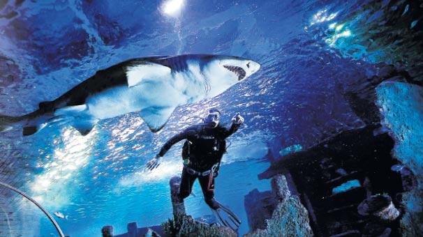 Photo of Köpekbalığı katliamını durdurun