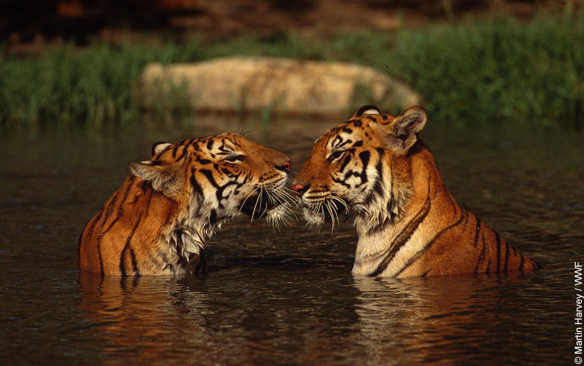 Photo of Bir Hediye İki Mutluluk!